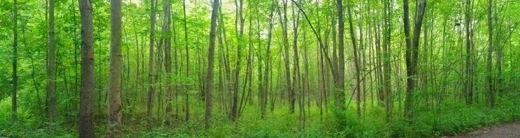 Sacred-grove-jason-bringhurst